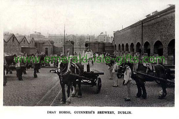 Dublin - Guinness Brewery - Dray Horse