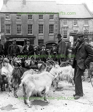 Minding the Goats at the Fair