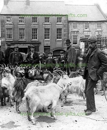 Minding the Goats at the Fair (old Irish photo)