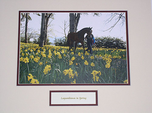 Leopardstown in Spring