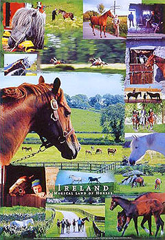 Ireland Magical Land Of Horses Poster