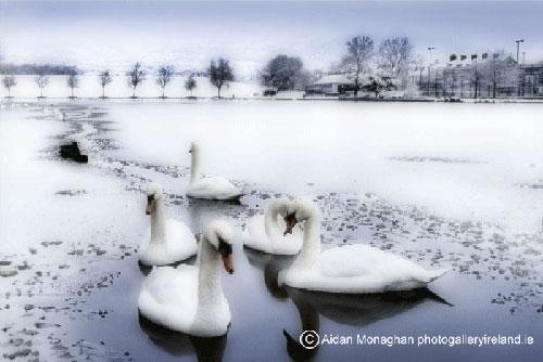 Winter Scene, Swans Waterworks, Belfast (Winter Scene, Swans Waterworks, Belfast)