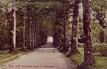 Roscommon - Rockingham - Beech Walk