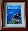 Sheep, Dunquin Pier, Dingle, Co Kerry (Irish Photo Print)