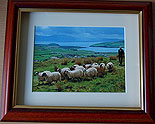 Shepherd, Dingle, Co Kerry, Ireland
