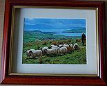 Shepherd, Dingle, Co Kerry, Ireland (Irish Photo Print)